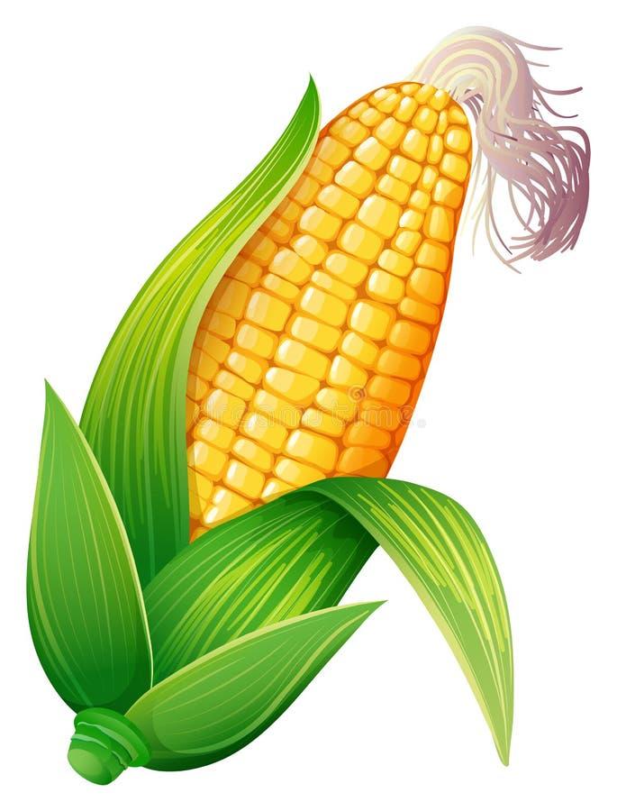 新鲜玉米棒的玉米 库存例证