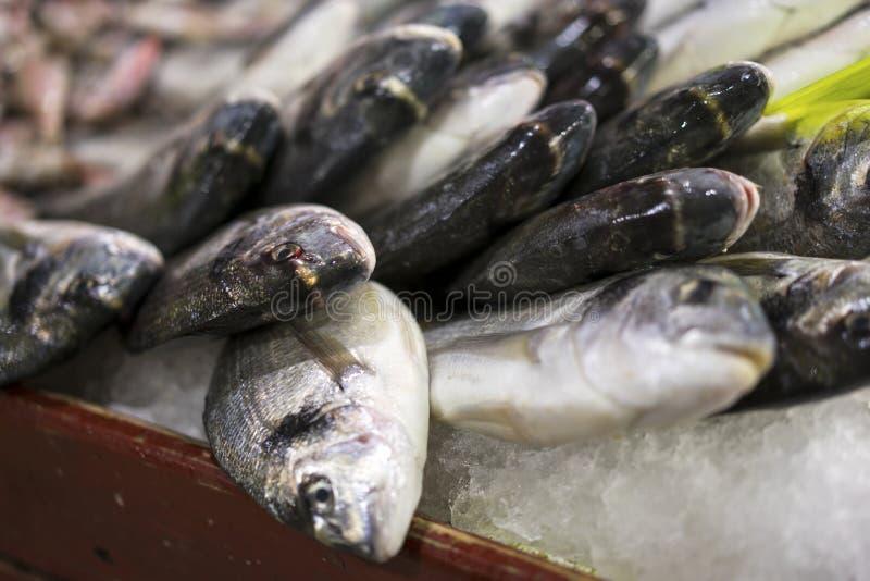 新鲜的低音在鱼市上 免版税库存照片