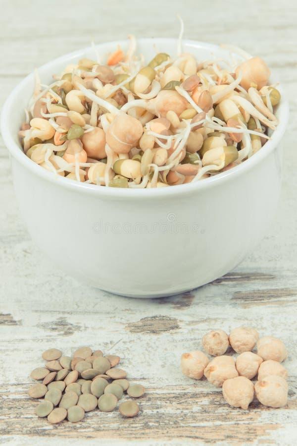 新鲜的健康扁豆和鸡豆新芽在碗 包含自然维生素和矿物的食物 免版税库存图片