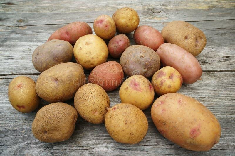 新鲜的农厂土豆 库存照片