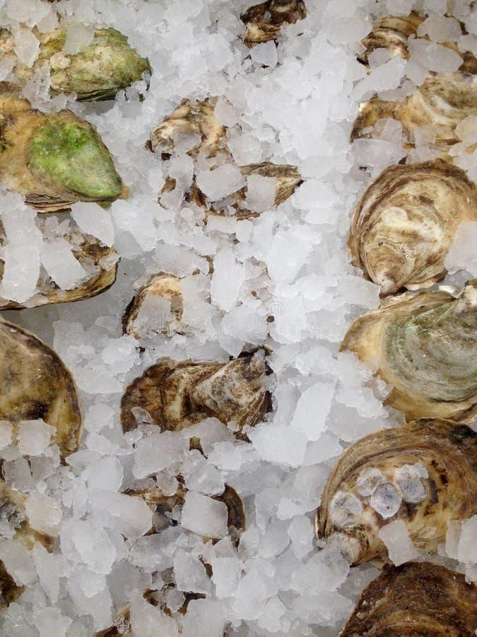 新鲜的冰牡蛎 库存图片