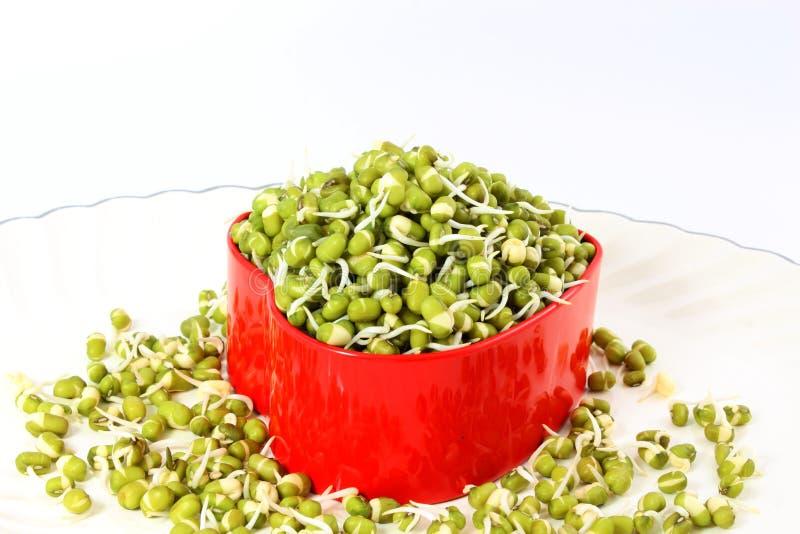新鲜的发芽的绿豆或绿色克豆在心脏容器 免版税库存图片