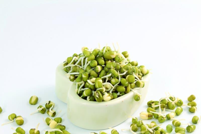 新鲜的发芽的绿豆或绿色克豆在心脏滚保龄球 图库摄影