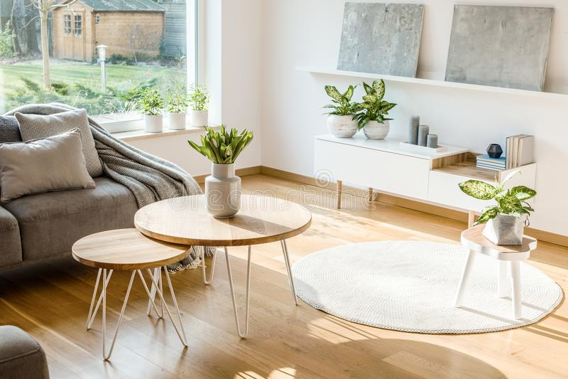 新鲜的在明亮的客厅安置的植物和花内部w 免版税库存图片