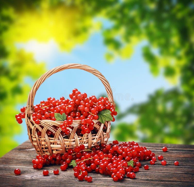 新鲜的在篮子的莓果红浆果 免版税库存照片