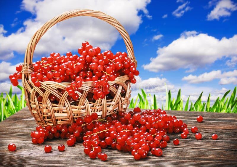 新鲜的在篮子的莓果红浆果 库存图片