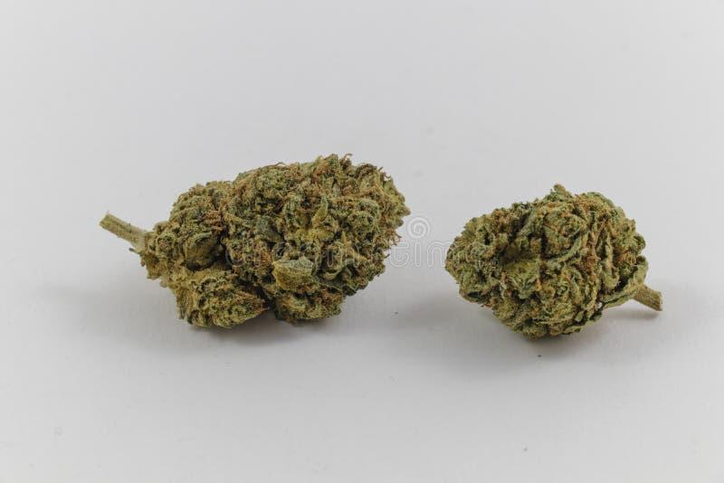 新鲜的大麻芽 免版税库存照片