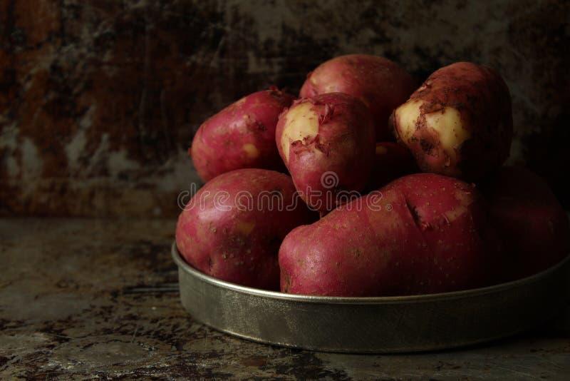 新鲜的庭院土豆 库存图片