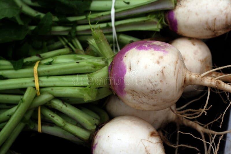 新鲜的庭院蔬菜 免版税库存图片