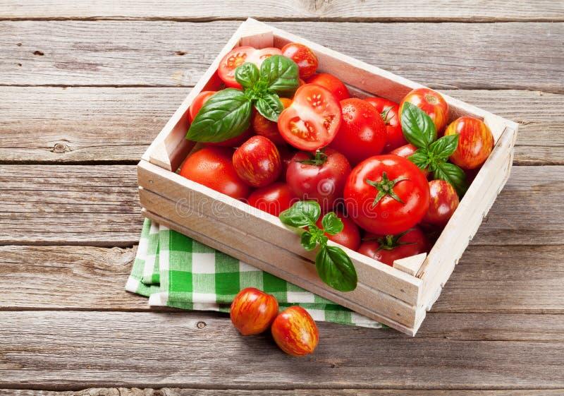新鲜的成熟庭院蕃茄和蓬蒿 库存照片
