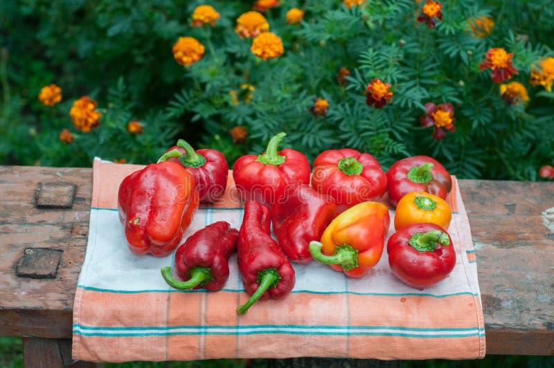 新鲜的成熟红色响铃辣椒粉胡椒 免版税图库摄影
