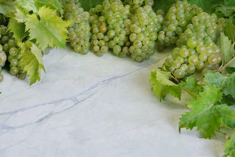 新鲜的成熟绿色白色鲜美水多的葡萄,与在白色大理石厨房用桌上的叶子可以用作为与自由空间的背景 库存图片