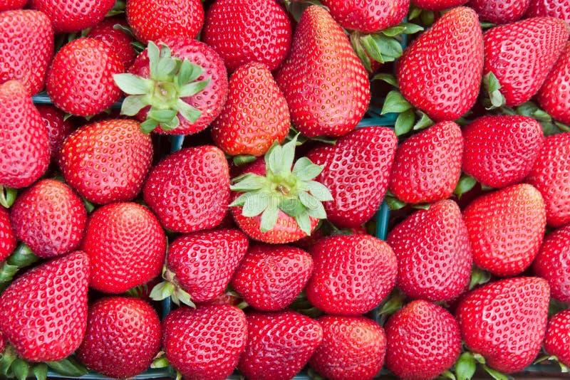 新鲜的成熟草莓 免版税库存图片