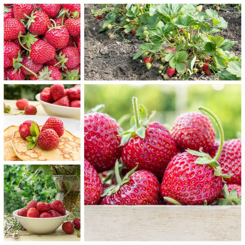 新鲜的成熟草莓 库存图片