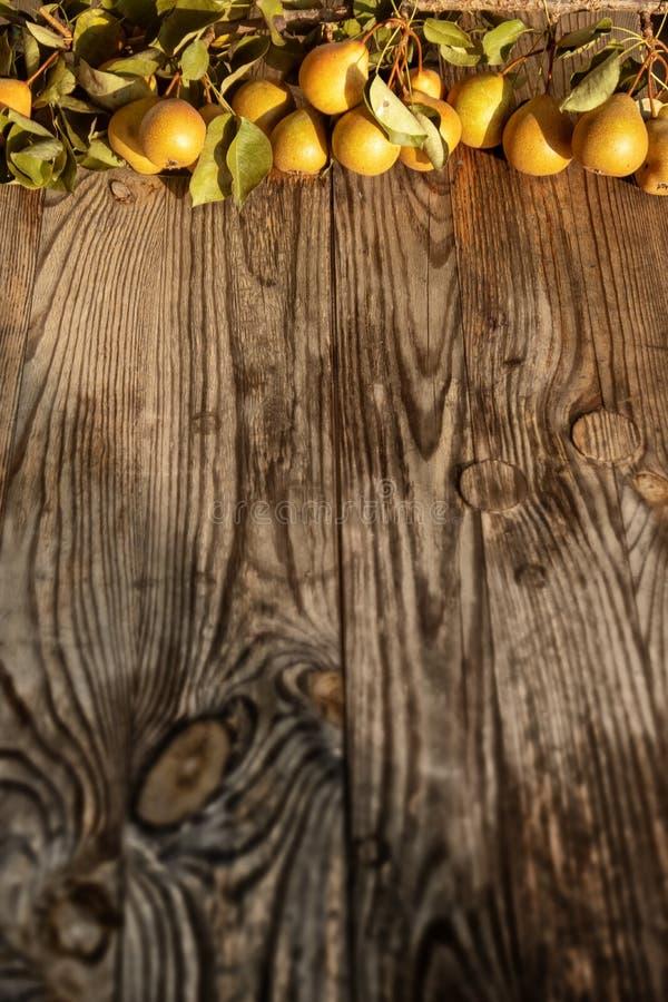 新鲜的成熟黄色和橙色鲜美和水多的梨,在与叶子的分支在与自由空间的土气木灰色背景 库存照片