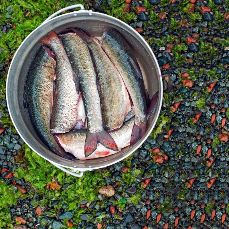 新鲜的掠过的鱼准备好烹调在常礼帽。 免版税库存图片