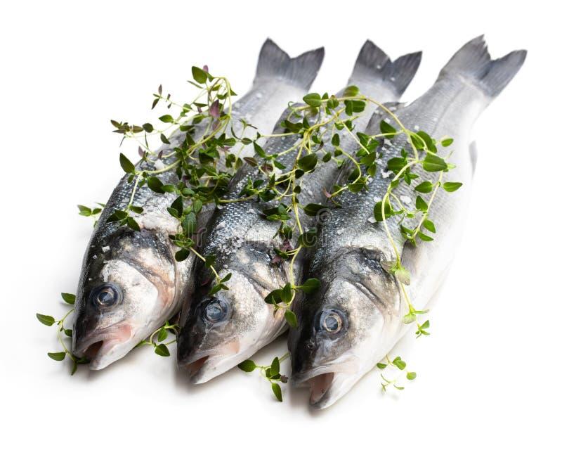 新鲜的整个鲈鱼鱼用在白色隔绝的麝香草草本 库存图片