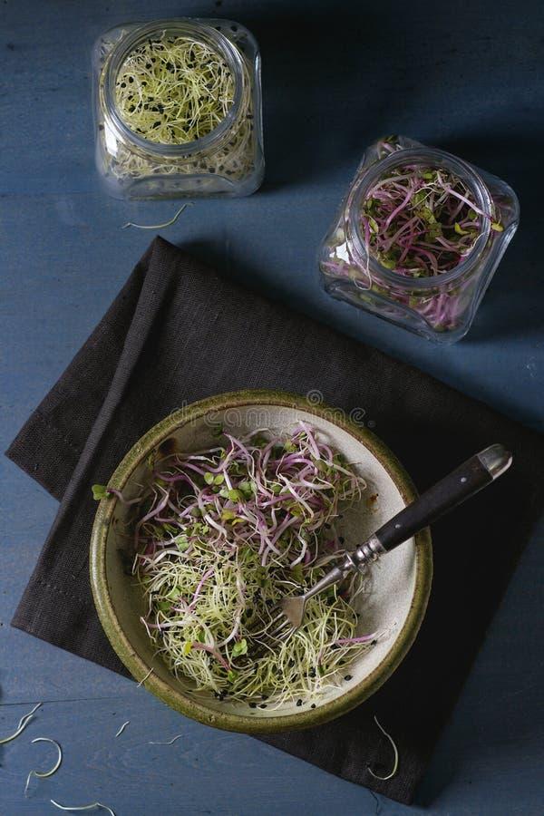 新鲜的新芽沙拉 免版税库存图片