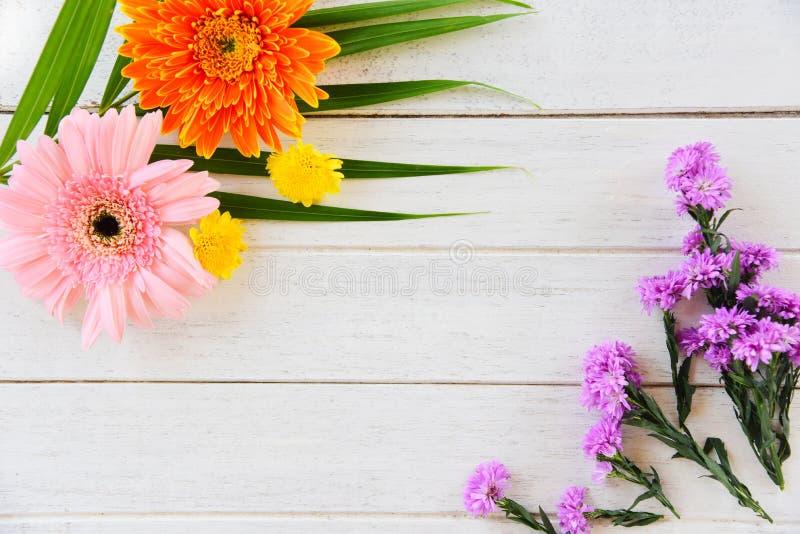 新鲜的春天夏天花框架构成热带植物大丁草五颜六色的花各种各样和绿色叶子 免版税库存图片