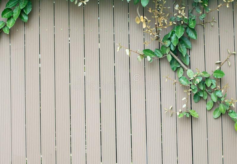 新鲜的春天绿色叶子和花植物在木篱芭背景 库存照片