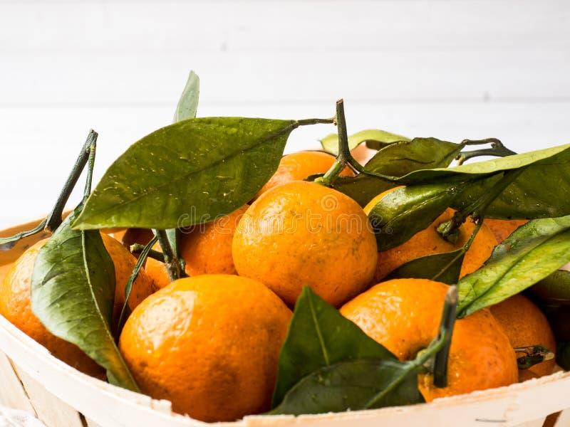 新鲜的普通话或蜜桔与词根和叶子在箱子在白色木背景 库存照片