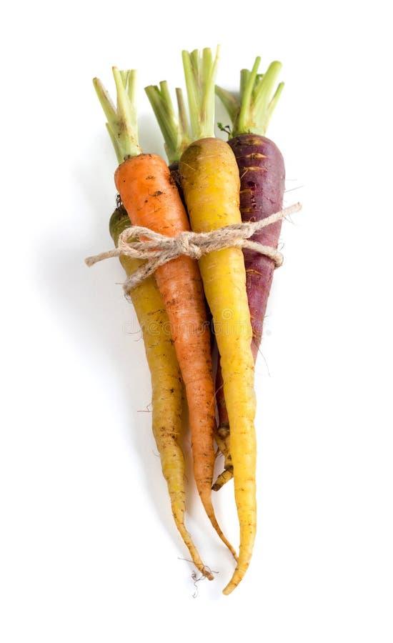 新鲜的有机彩虹红萝卜 免版税库存图片
