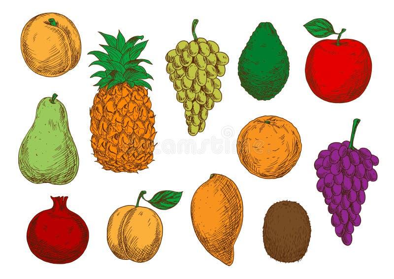 新鲜的有机果子剪影  皇族释放例证