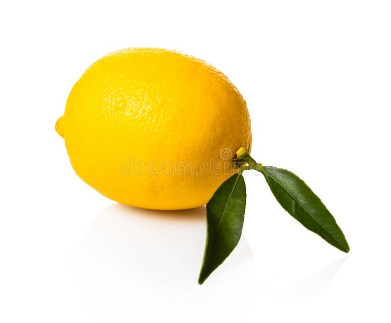 新鲜的有机柠檬 免版税库存照片