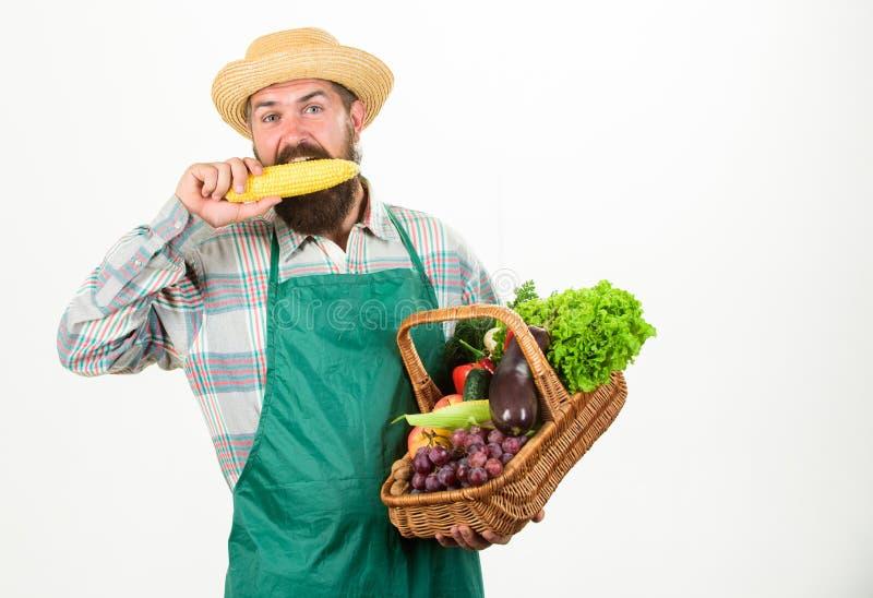 新鲜的有机菜柳条筐 行家花匠穿戴围裙运载菜 人有胡子的提出的菜 库存照片