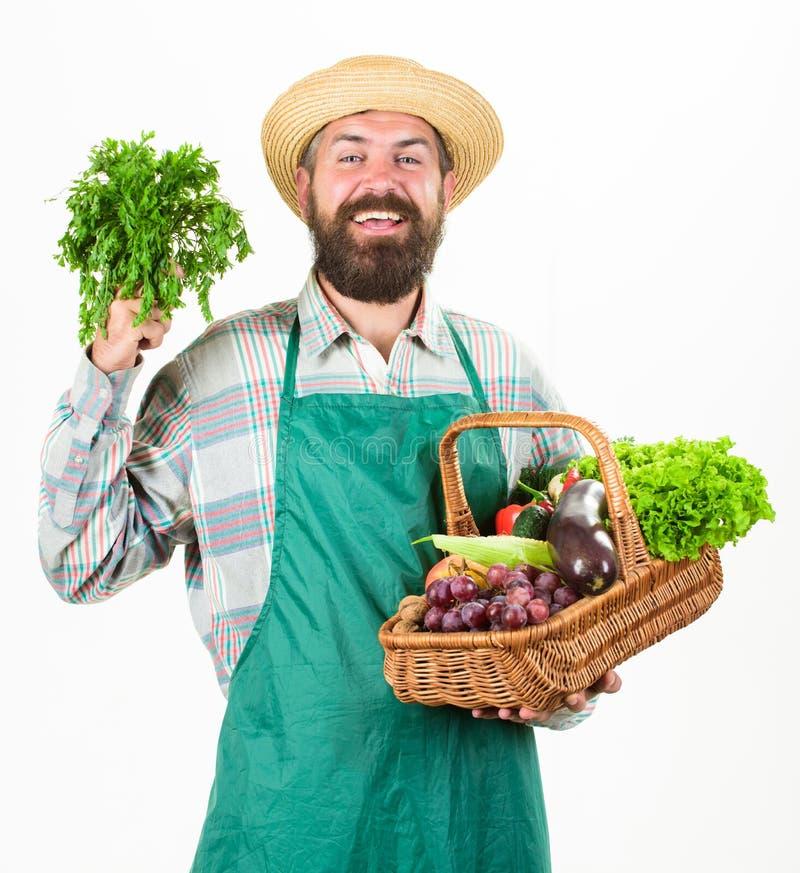 新鲜的有机菜柳条筐 行家花匠穿戴围裙运载菜 农夫草帽举行荷兰芹和 免版税库存图片