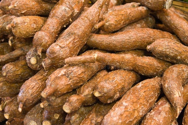 新鲜的木薯 库存图片