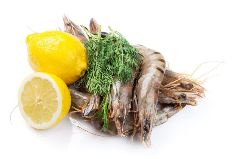 新鲜的未加工的老虎大虾和香料 库存照片