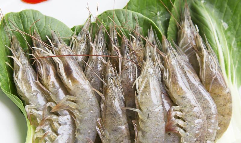新鲜的未加工的虾1 免版税库存照片