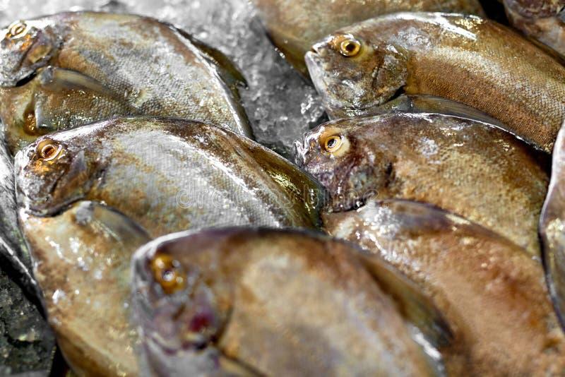 新鲜的未加工的食物 鱼在市场上 海鲜 健康营养 免版税库存图片