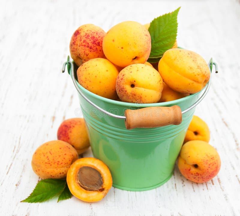 新鲜的杏子 免版税库存照片