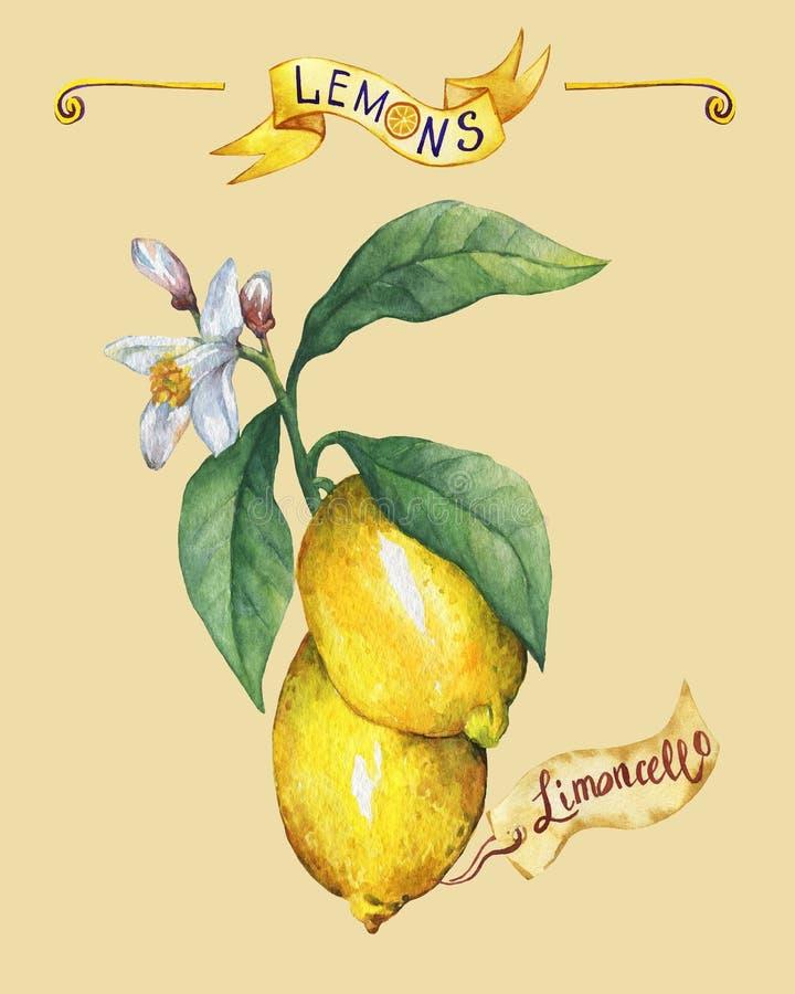 新鲜的柑桔柠檬的分支与绿色叶子和花的 海报 库存例证