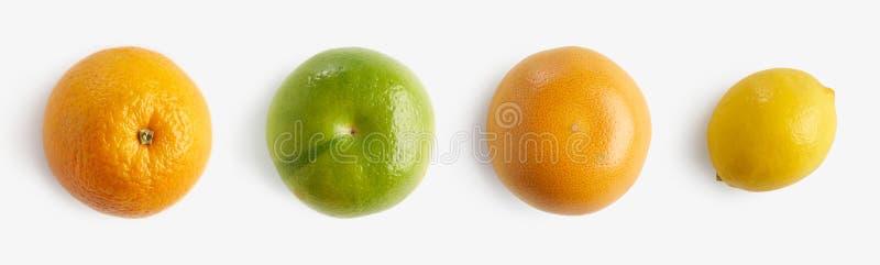 新鲜的柑橘水果桔子,柠檬,葡萄柚,柚从上面半切了,布局的样式 健康食物和营养 图库摄影