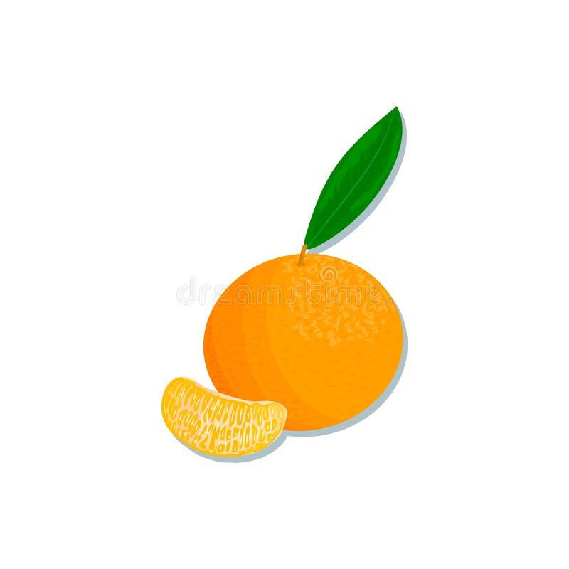 新鲜的柑橘 桔子、柠檬、石灰、香柠檬、蜜桔和葡萄柚与叶子和切片 库存例证