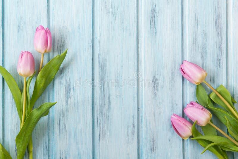 新鲜的桃红色郁金香在蓝色木桌,与拷贝空间的顶视图上开花 免版税库存照片