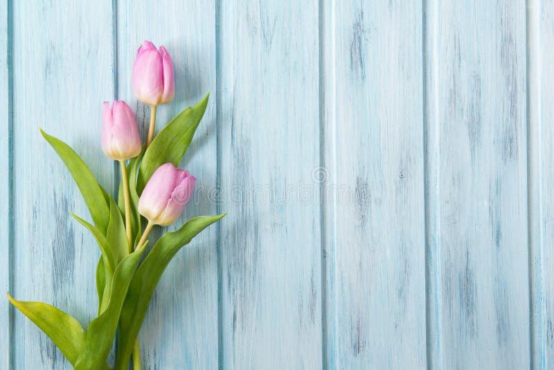 新鲜的桃红色郁金香在蓝色木桌,与拷贝空间的顶视图上开花 库存图片