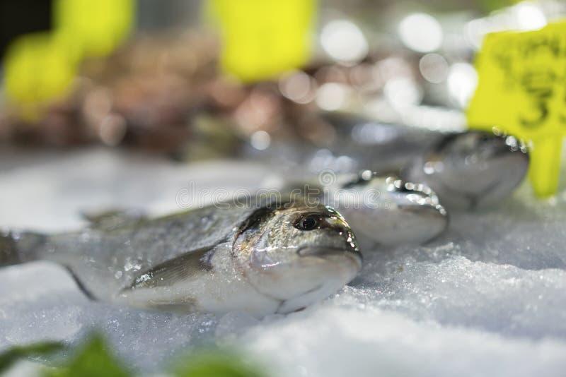 新鲜的梭鱼在鱼市上 免版税库存照片