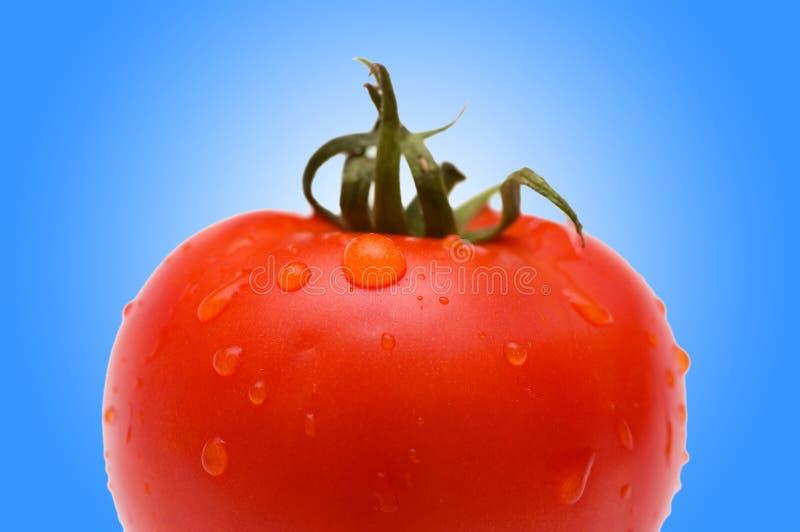 新鲜的梯度红色蕃茄 免版税库存图片