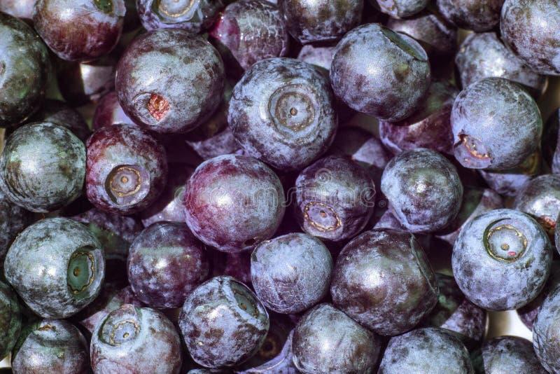 新鲜的森林蓝莓莓果背景,宏观摄影,越桔, hurtleberry 免版税库存照片