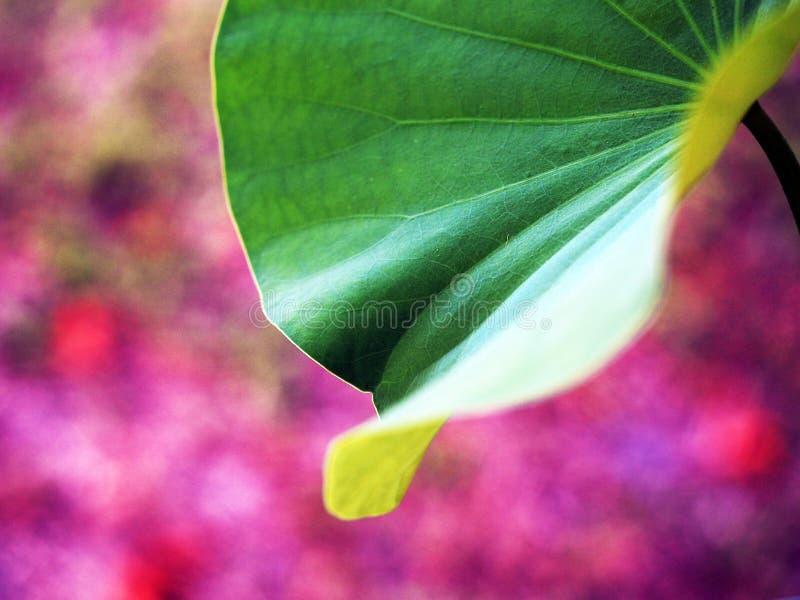 新鲜的植物离开射击、精选的焦点和bokeh背景 库存图片