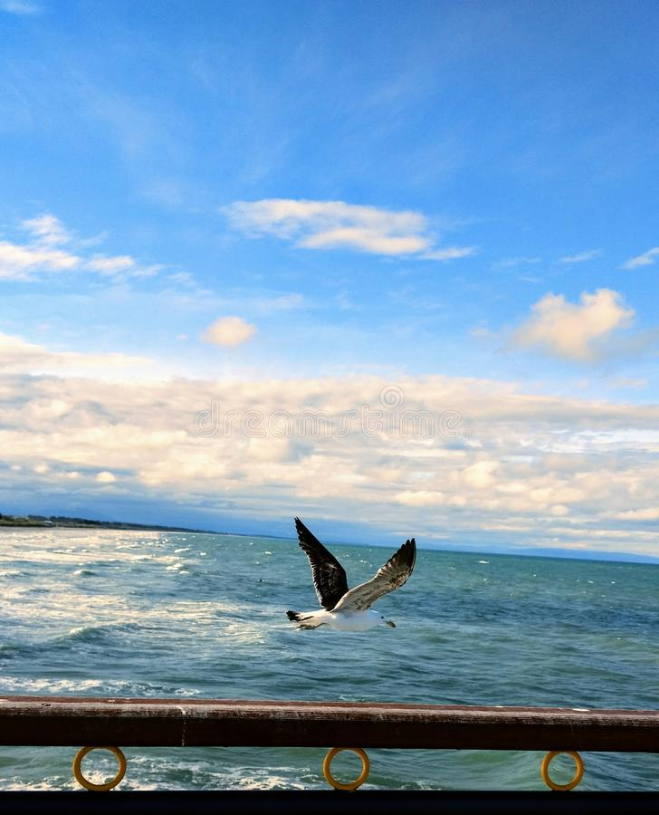 新鲜的海洋空气 免版税库存图片