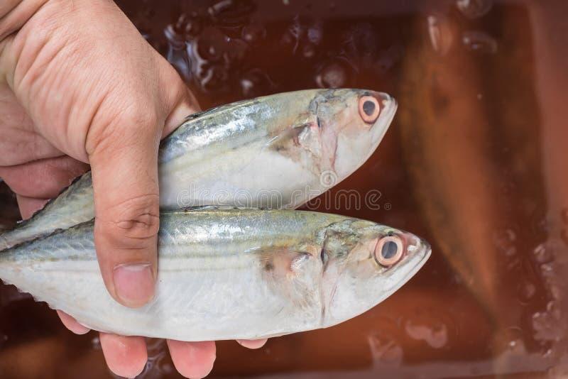 新鲜的海鱼在人的手上 免版税库存图片