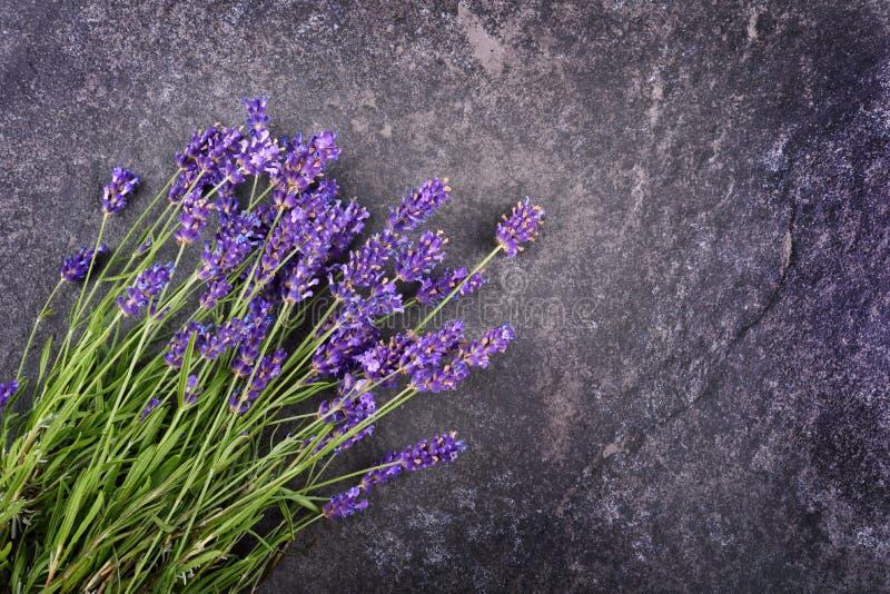 新鲜的淡紫色花 免版税库存照片