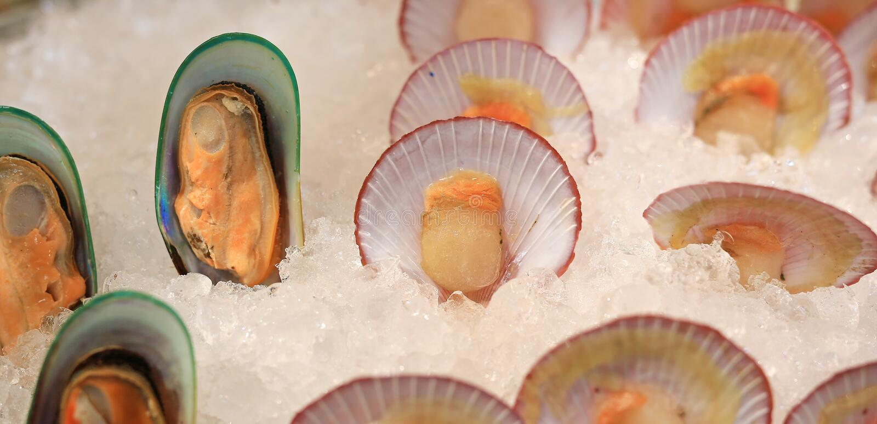 新鲜的淡菜和扇贝在冰 免版税图库摄影