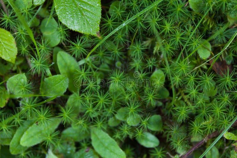 新鲜的深绿色庭院,生气勃勃草本背景 免版税图库摄影