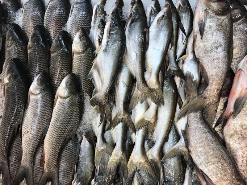 新鲜的湖水鱼 免版税库存照片